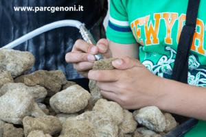 Simulazione del lavoro del Paleontologo al museo