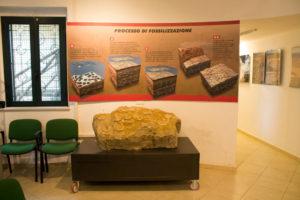 Banco fossilifero esposto al Museo PARC di Genoni
