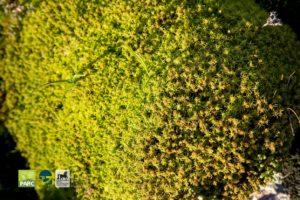 Piante viste durante una visita guidata al Parco della Giara