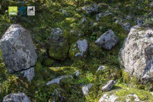 Visita guidata a Bruncu Suergiu al Parco della Giara